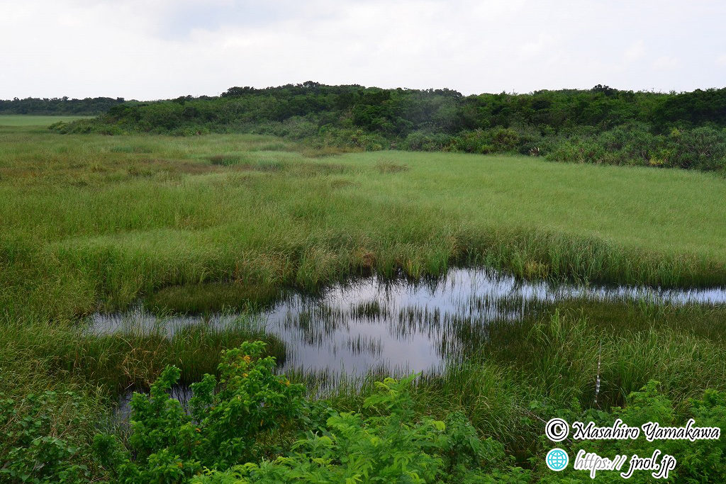 宮古島・池間島にある池間湿原